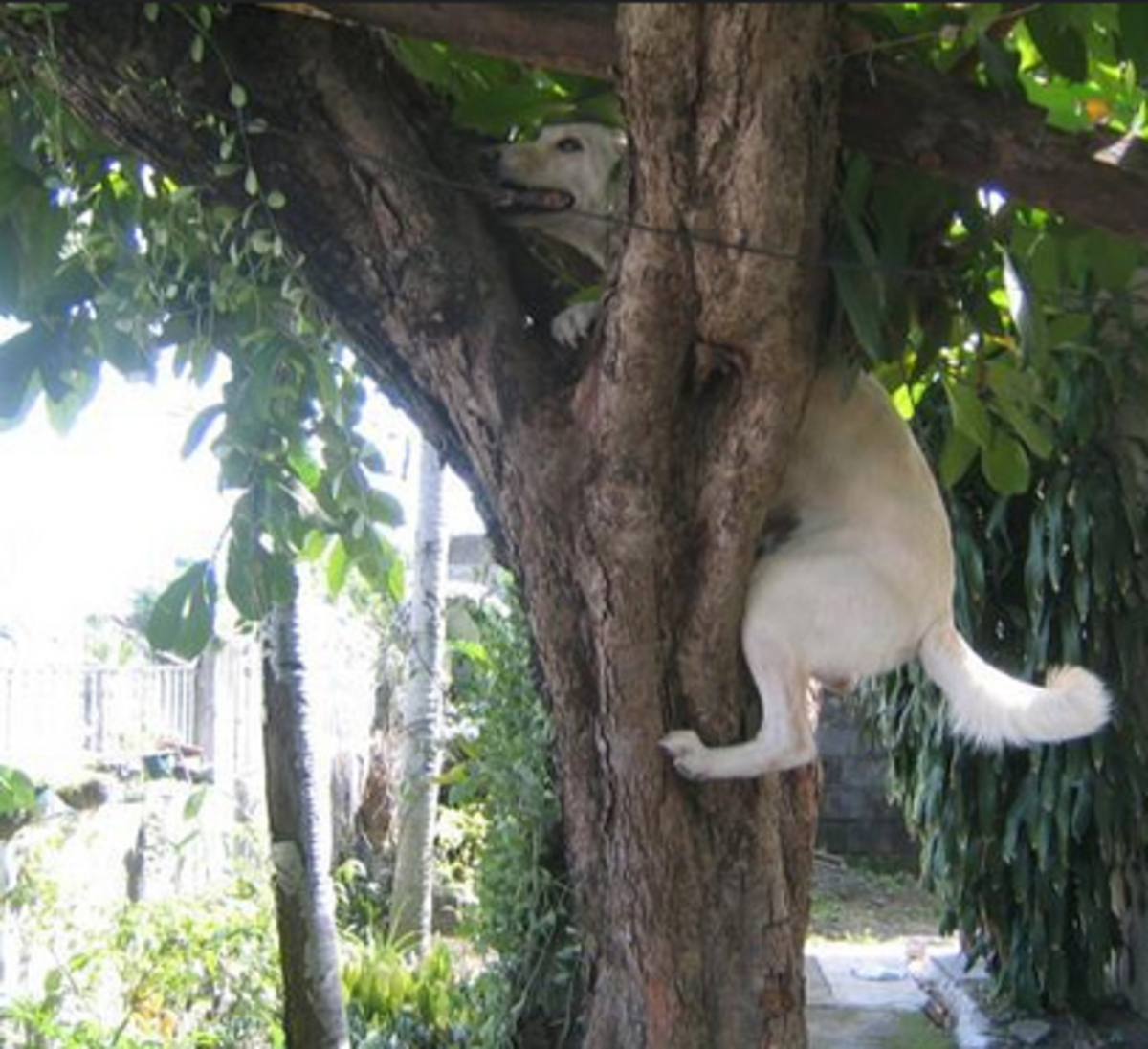 Why Can Cats Climb Trees