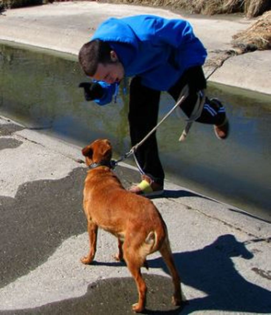 dog-discipline