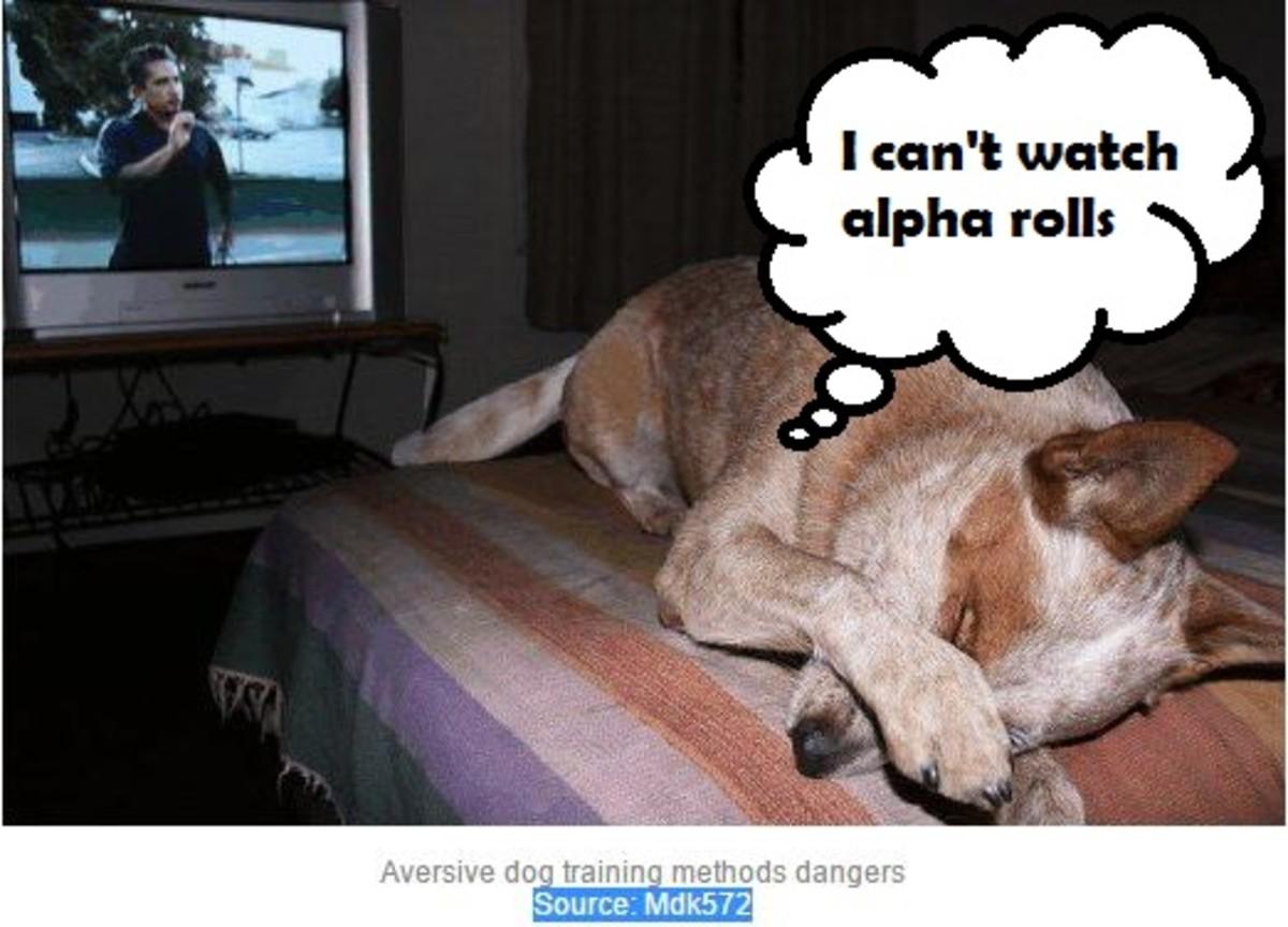 dog-aversive