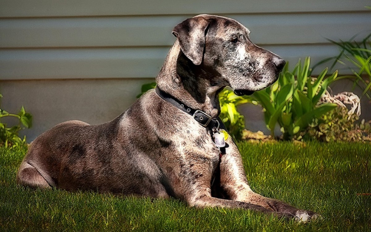 An Insight into Dog Appetite and Satiety