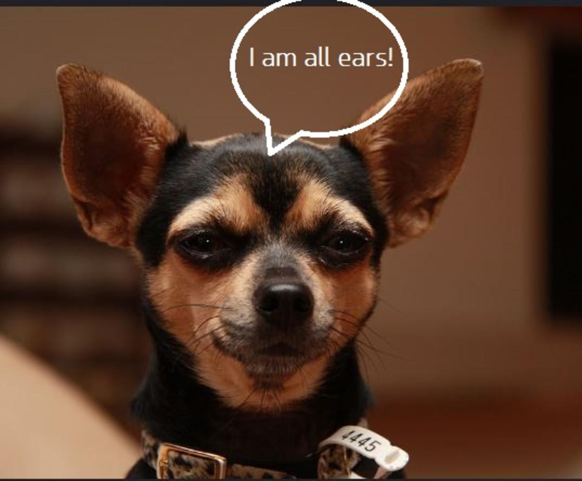 DOG EAR SLITS