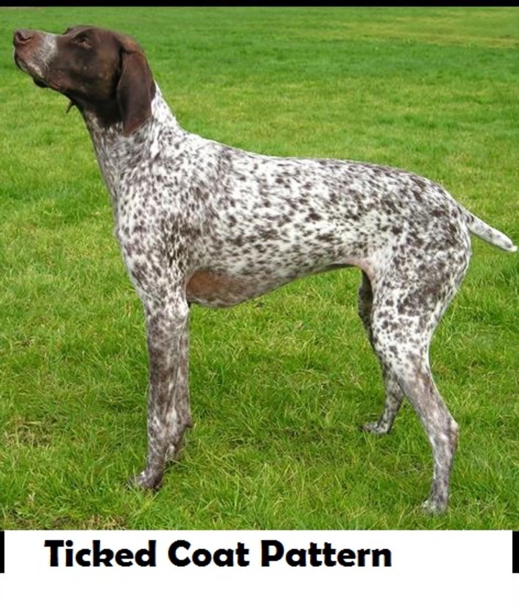 dog-ticked-coat