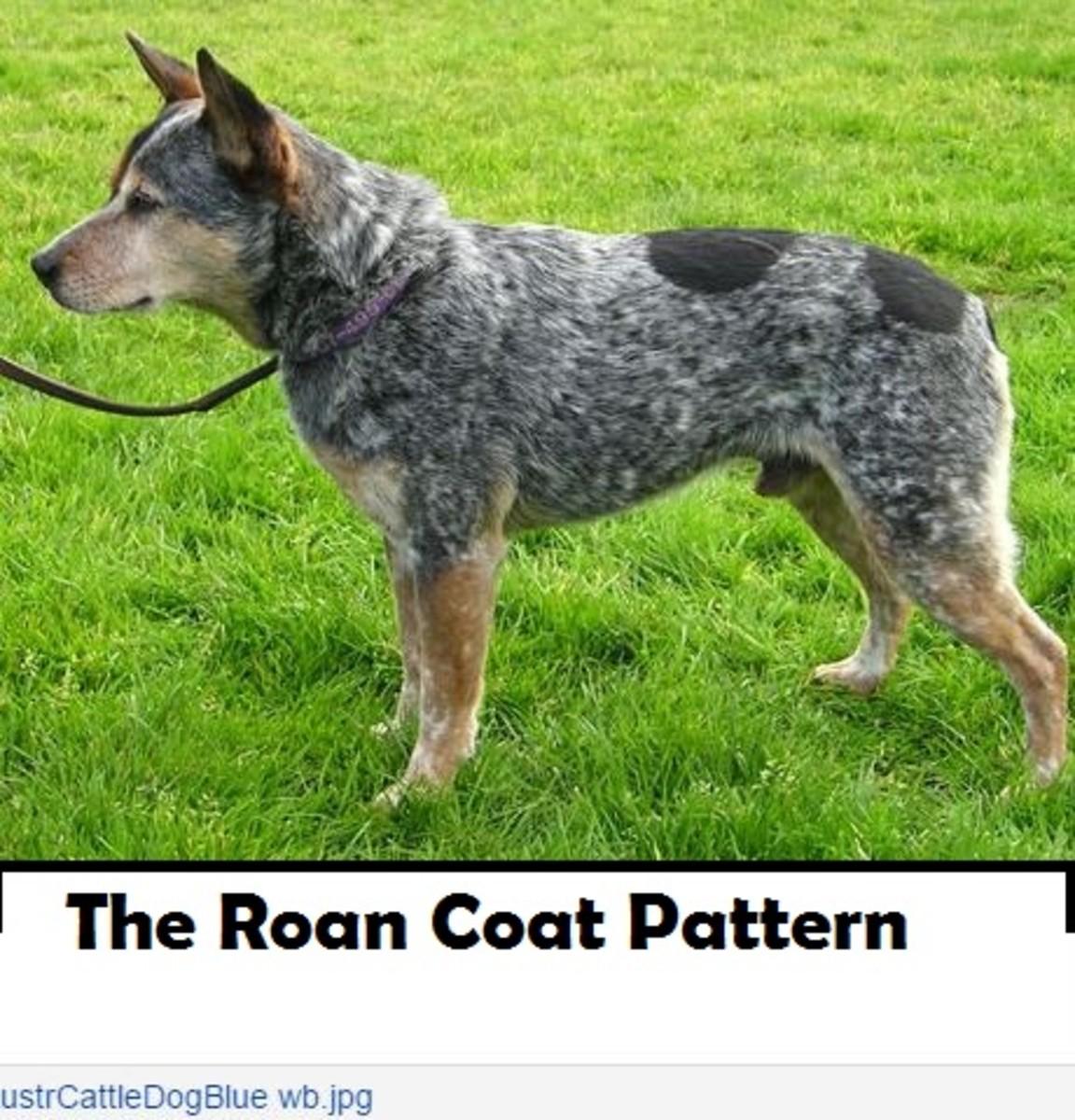 roan-dog-coat-pattern