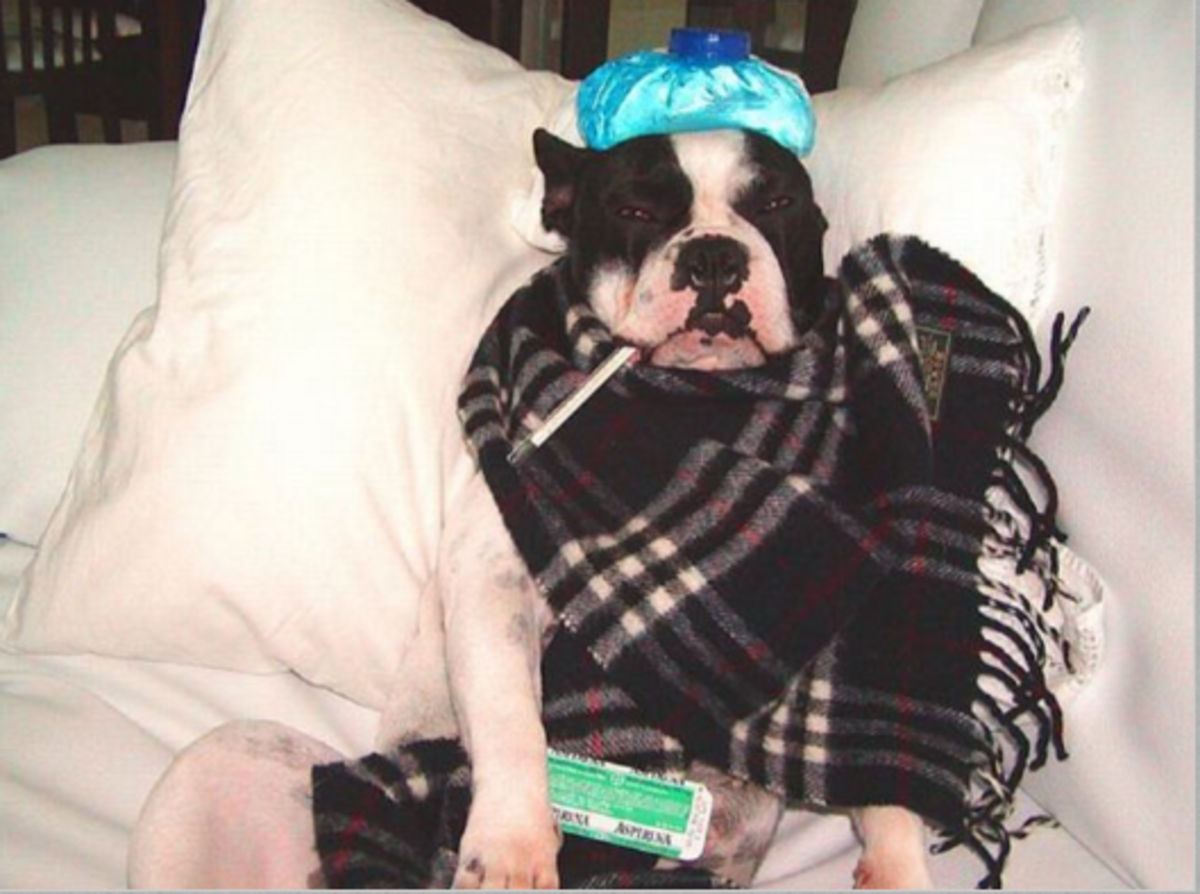 dog cold loss of appetite