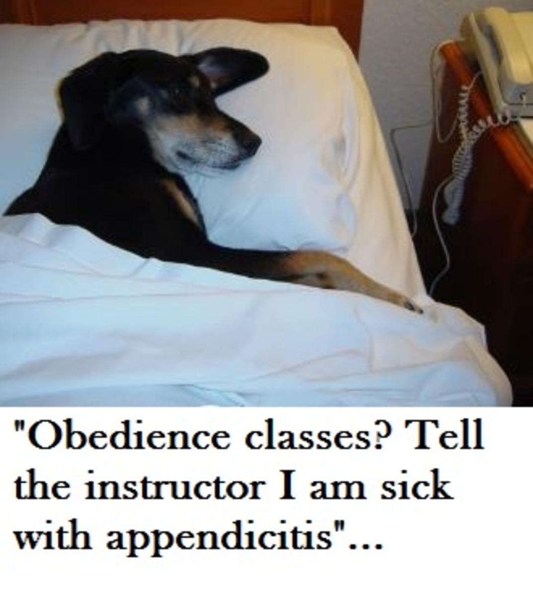 dog appendix