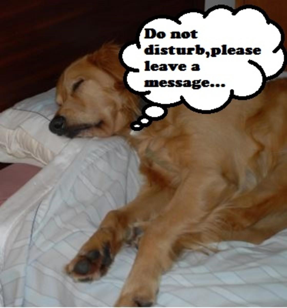 dog-sleep-growling