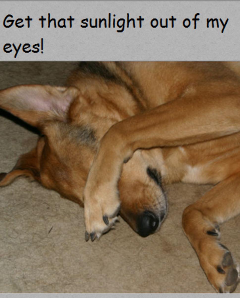dog daylight saving time