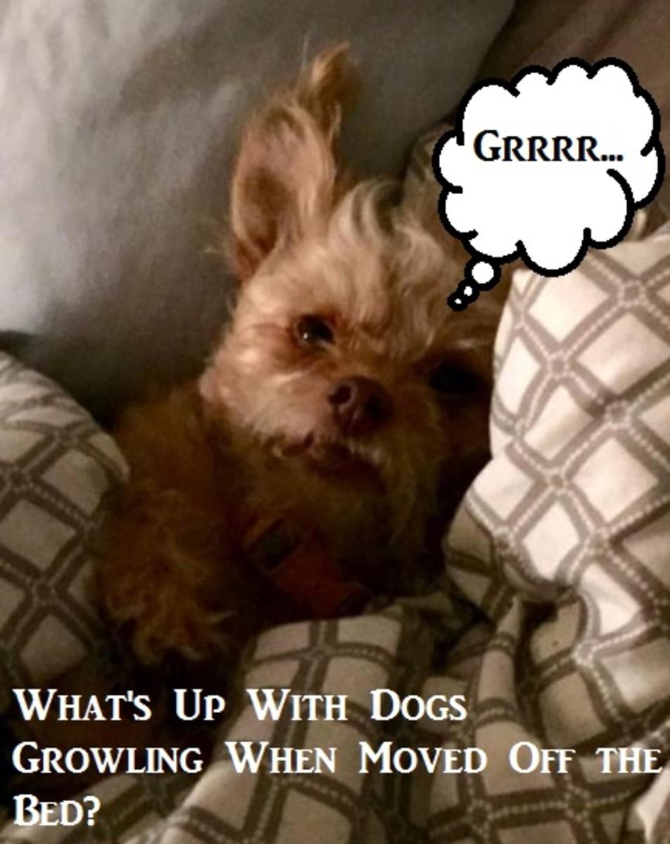 dog-bed