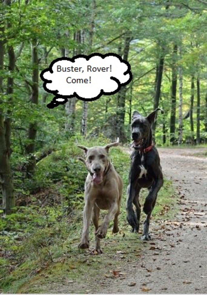 Selective hearing in dogs