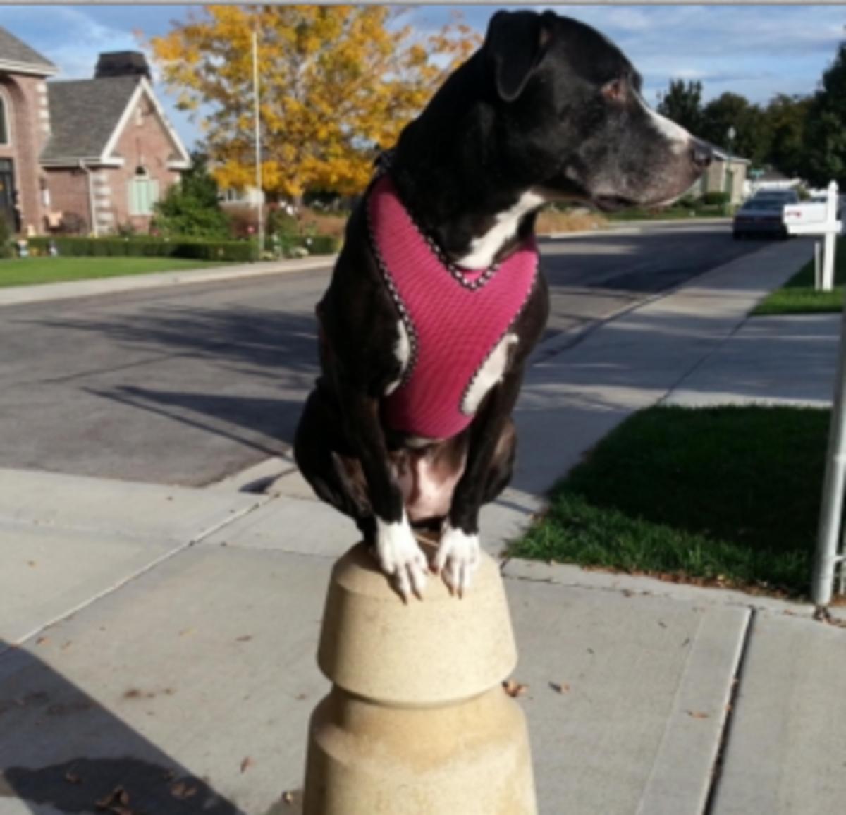 dog sense of equilibrium