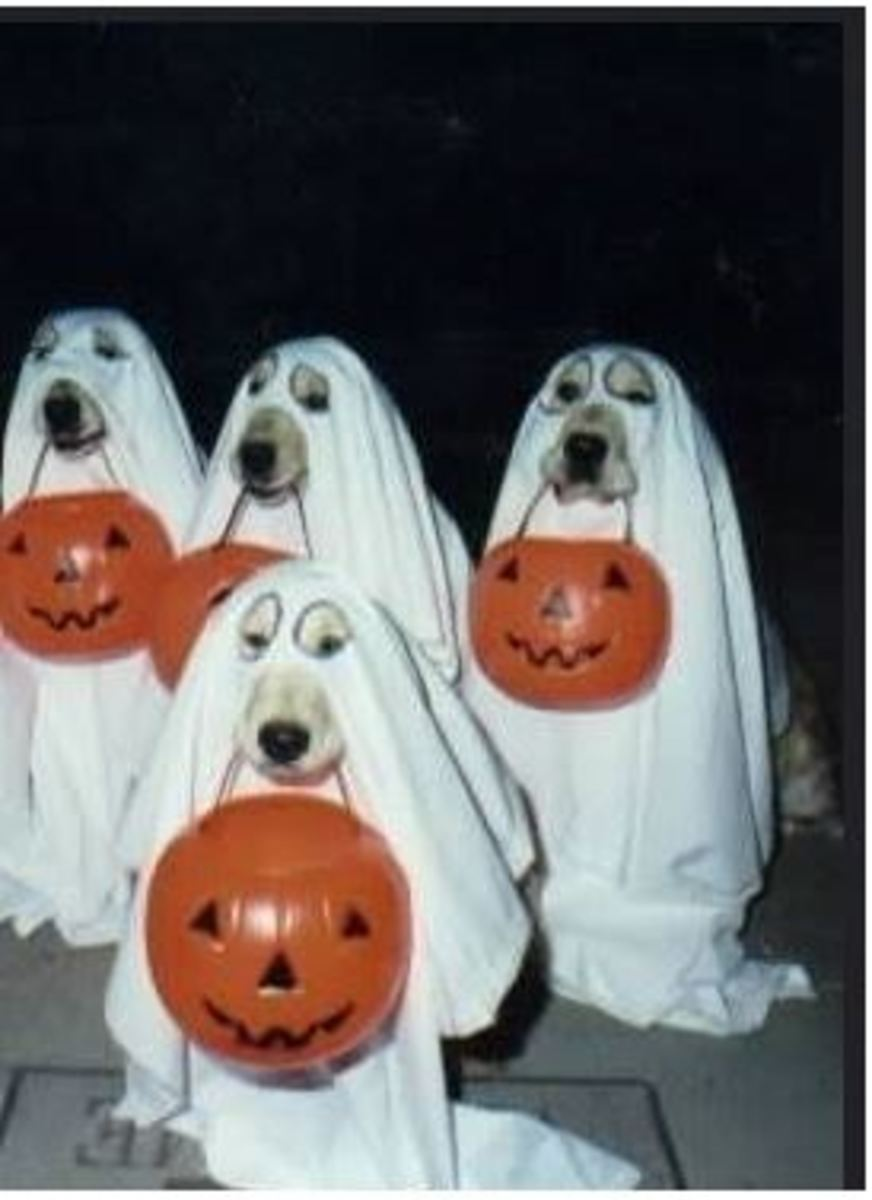 dog-ghost-activity