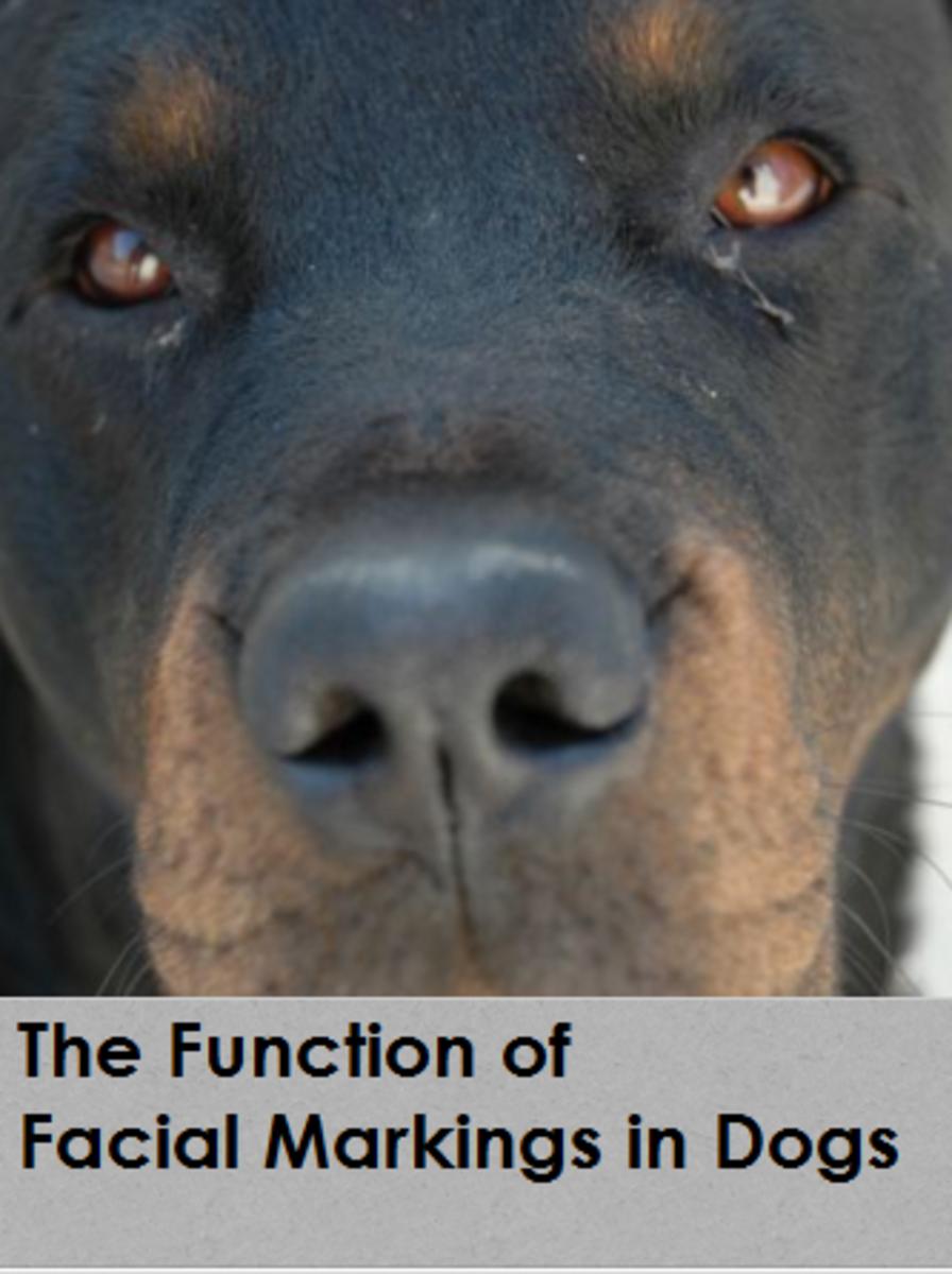 dog facial markings