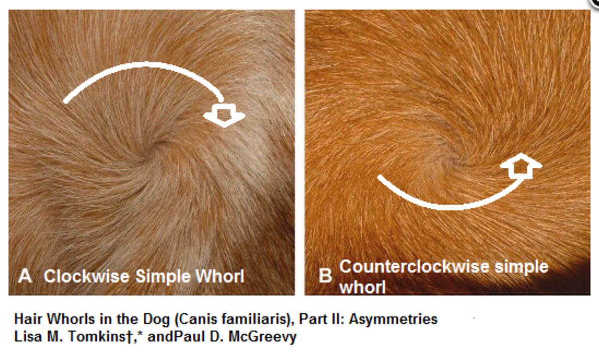dog hair whorl