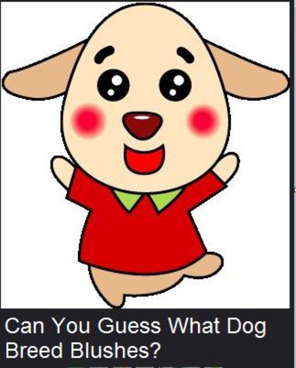 dog breed blushes