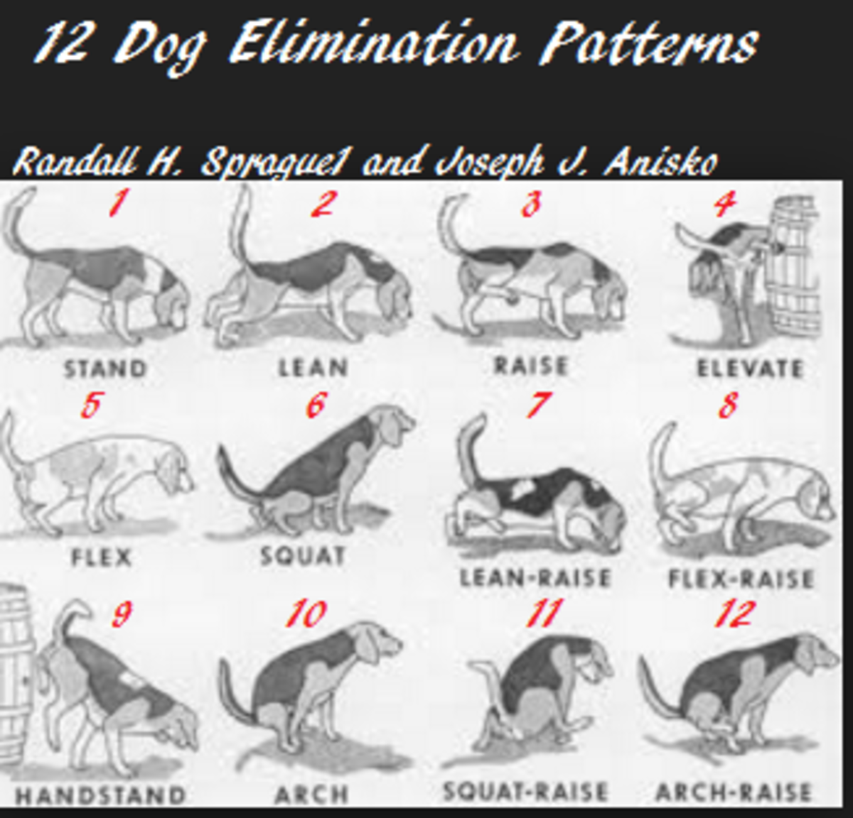 dog peeing positions