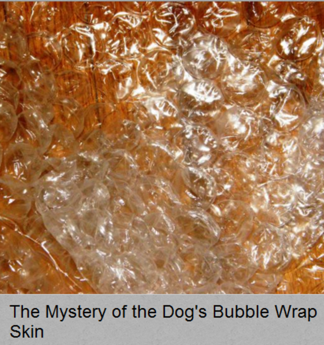 The Mystery of Air Bubbles Under a Dog's Skin - Dog Discoveries