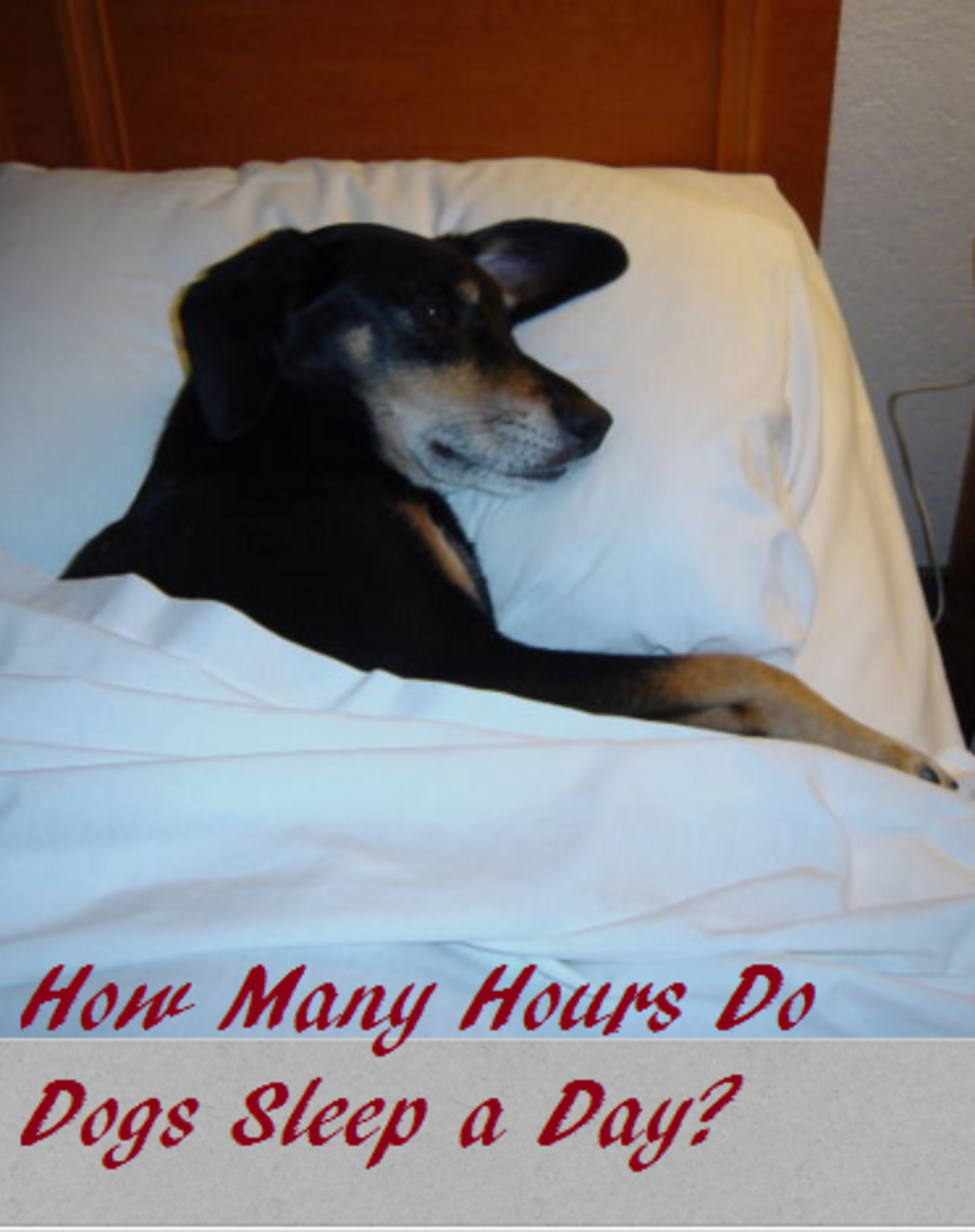 dog sleeping hours