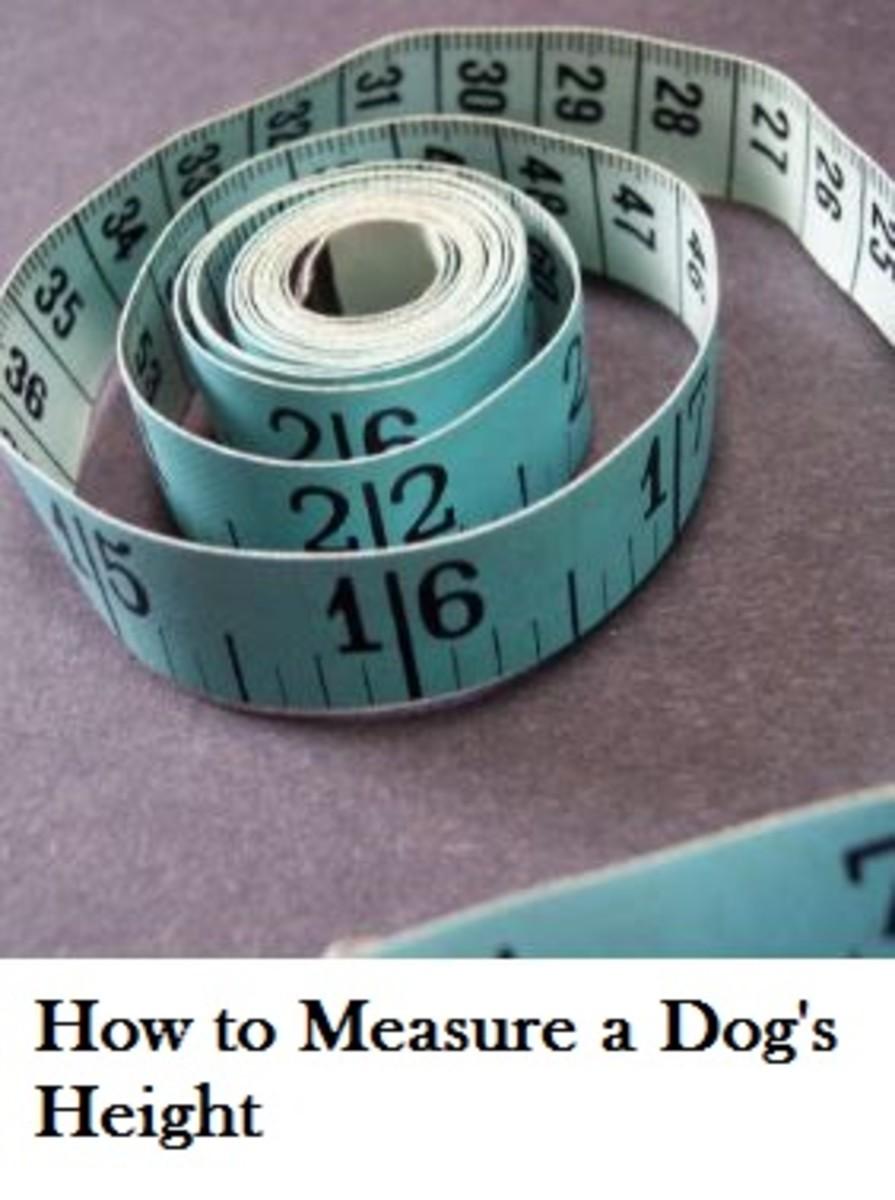 dog height measure
