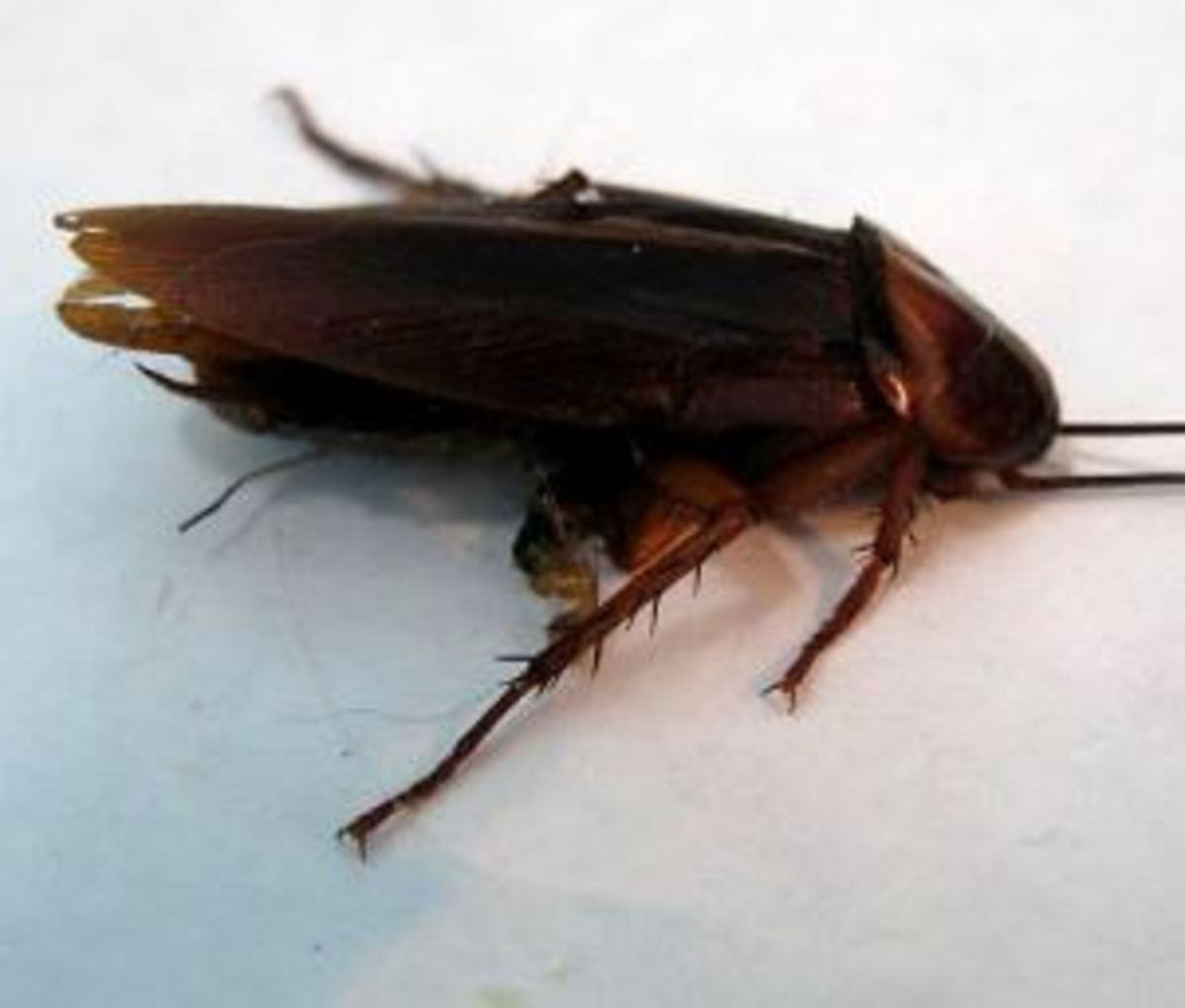 My Dog Eats Cicadas