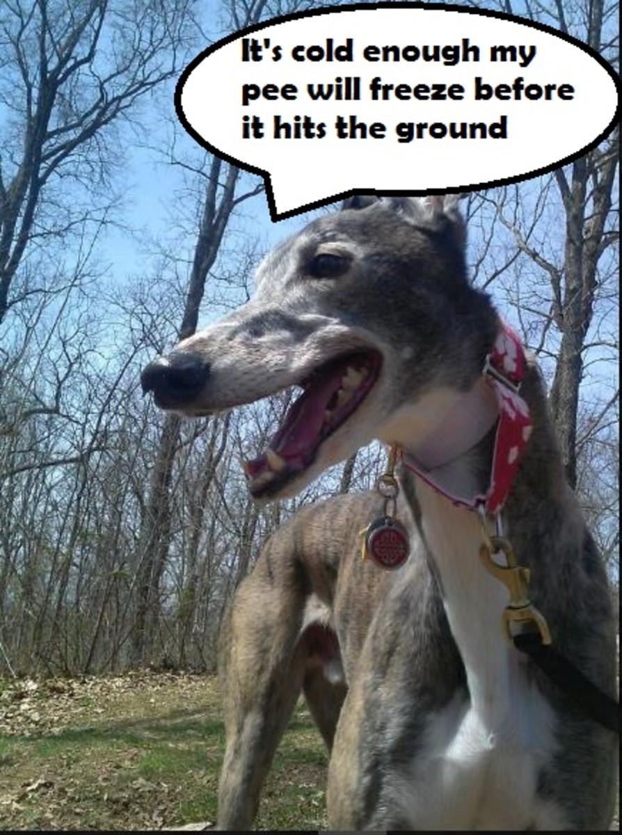 cold-greyhound