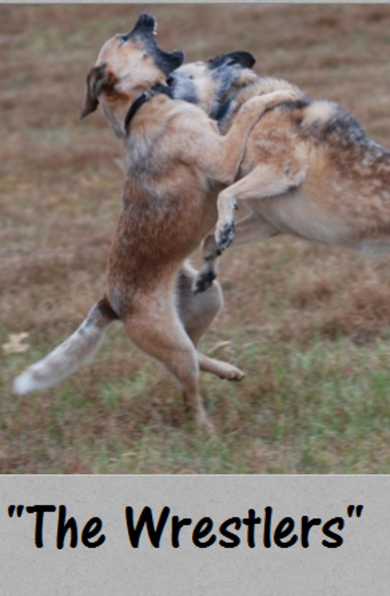 wrestling dogs