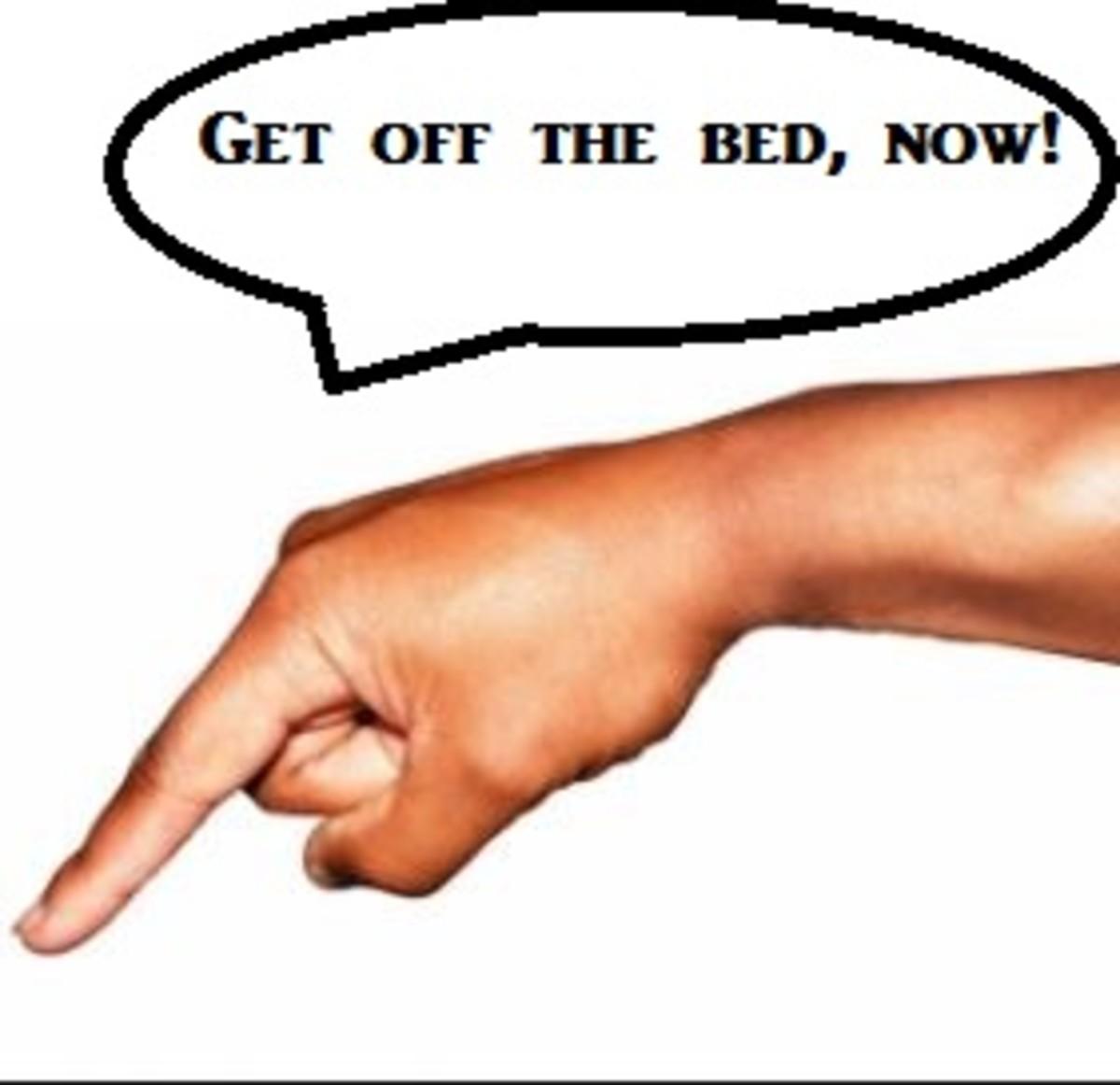 dog-off-bed