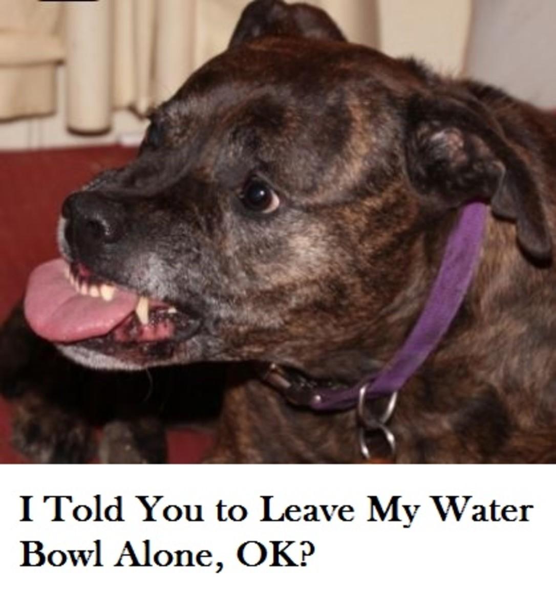 dog-guarding-water