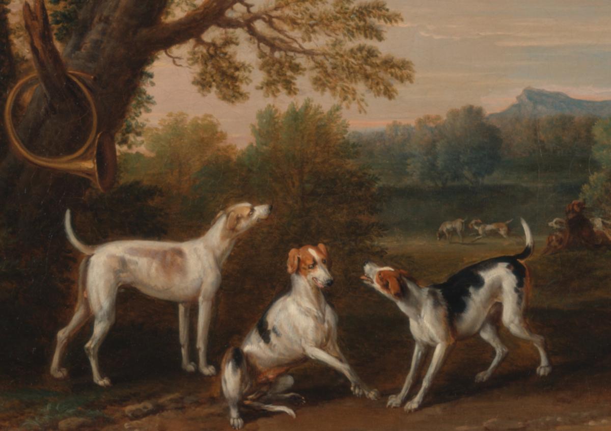 babbler hound