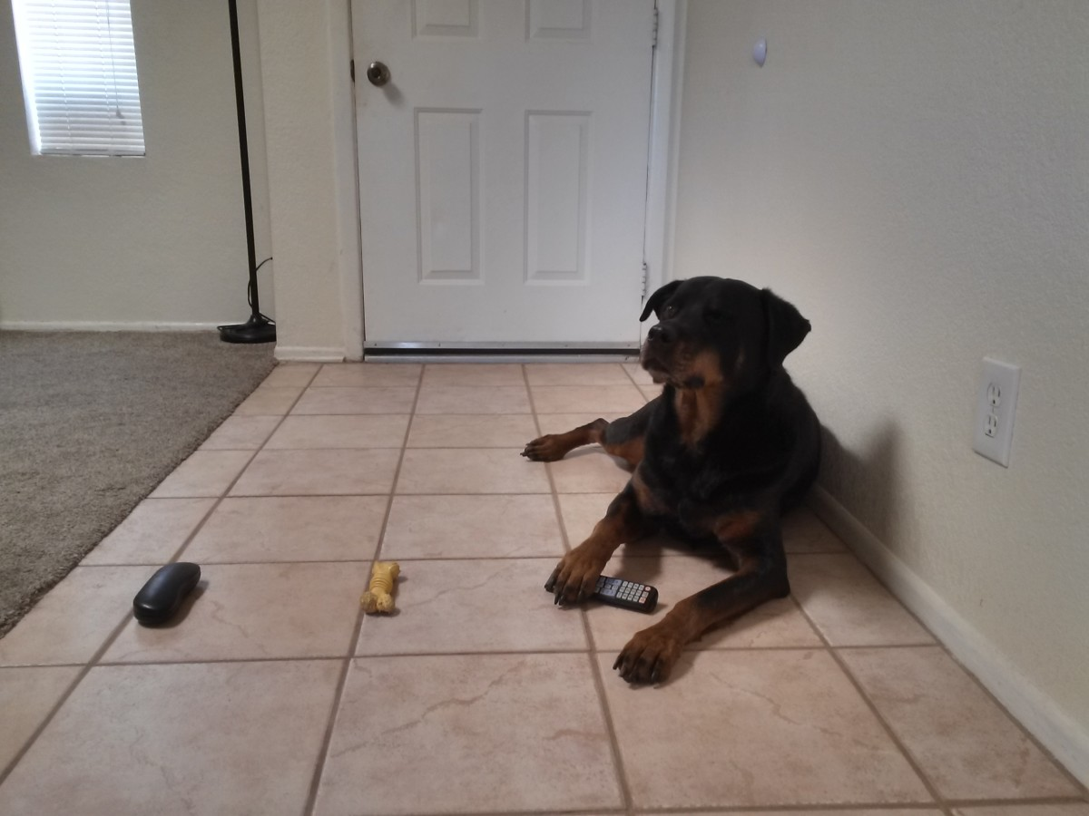 """Kaiser here is learning to associate the word """"remote"""" with the object."""
