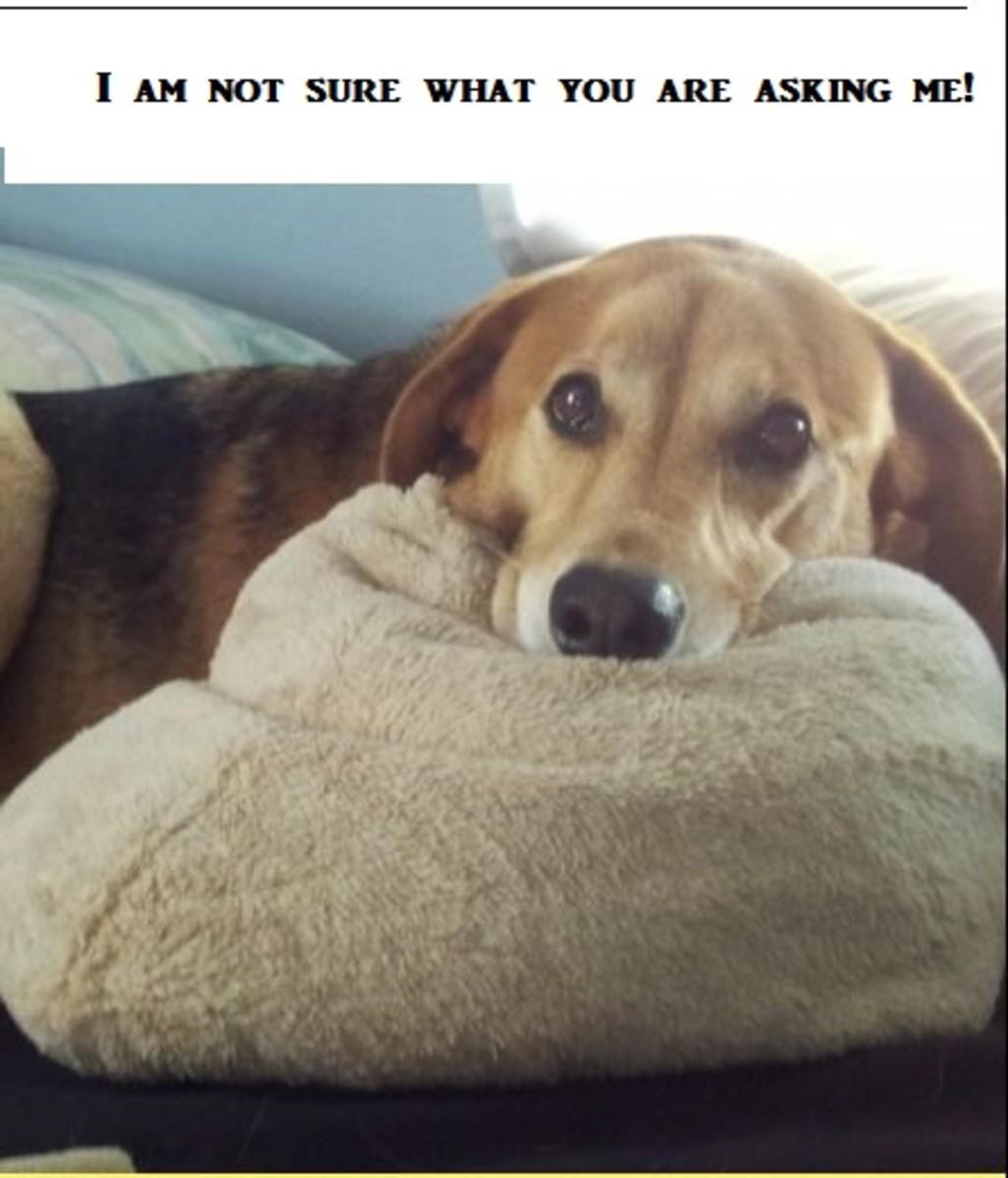 get-dog-off-bed