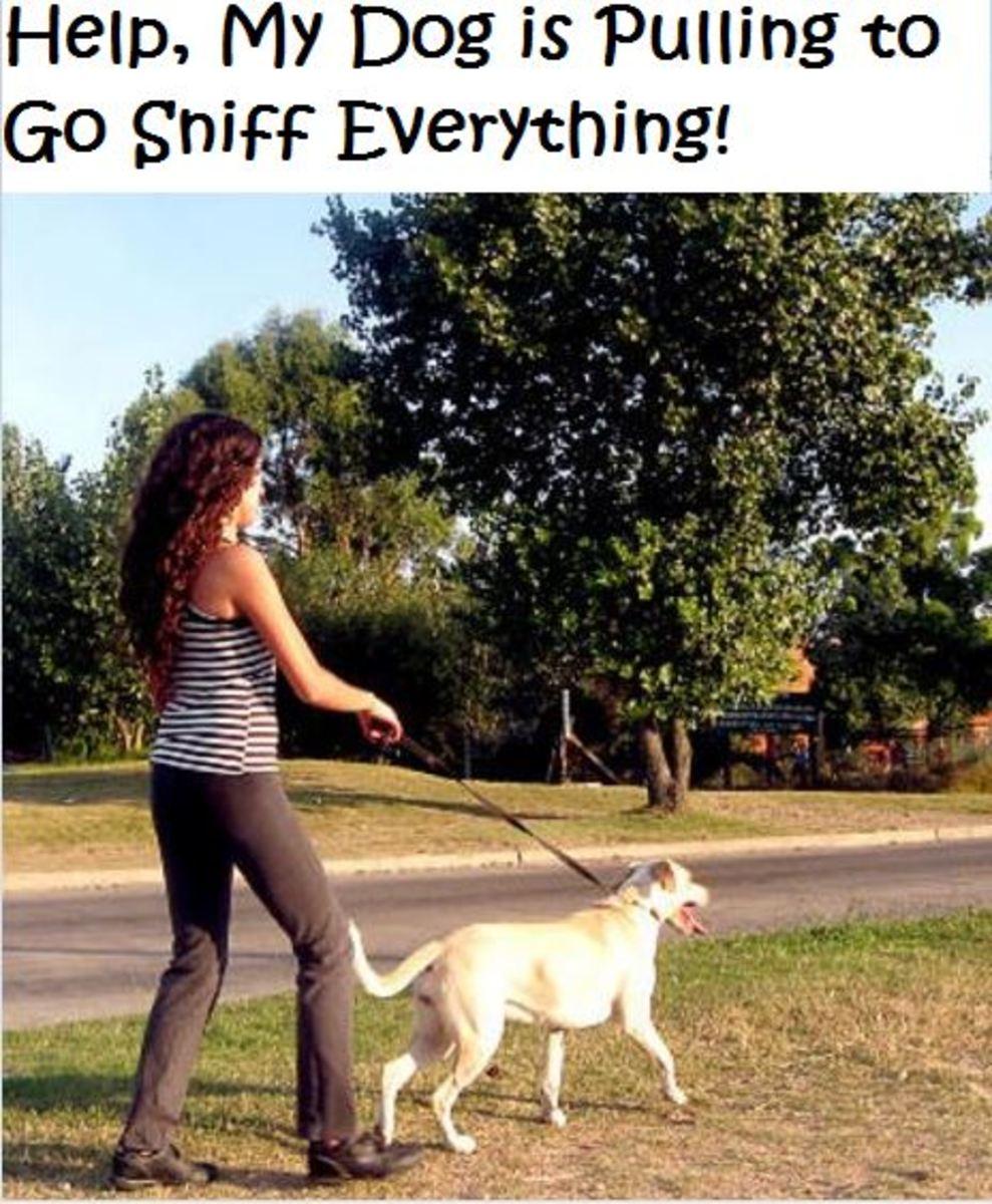 dog keeps sniffing on walks