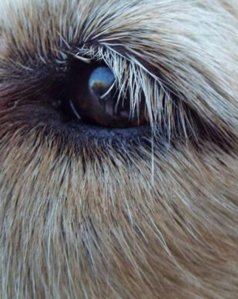 dog eye floaters