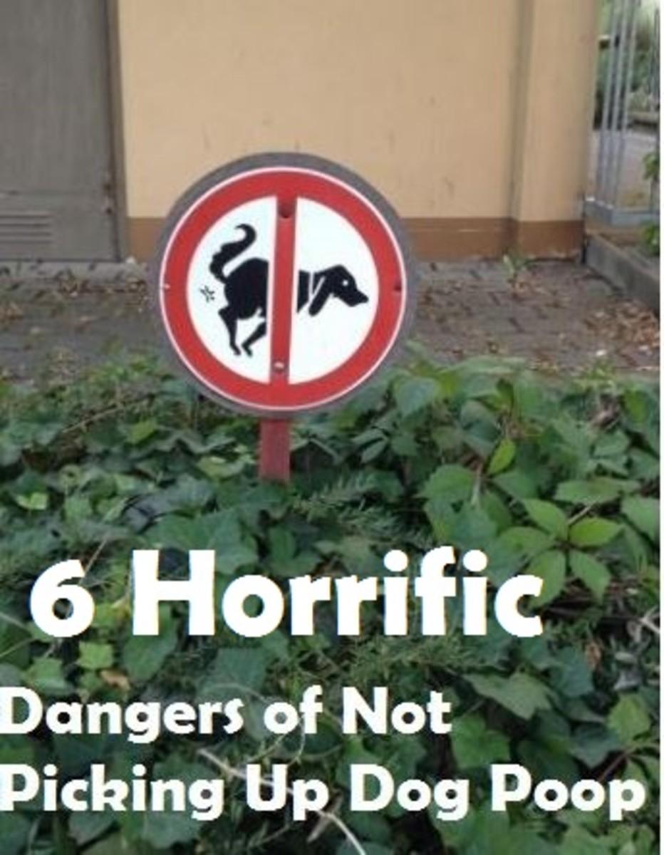 dangers-of-not-picking-dog-poop