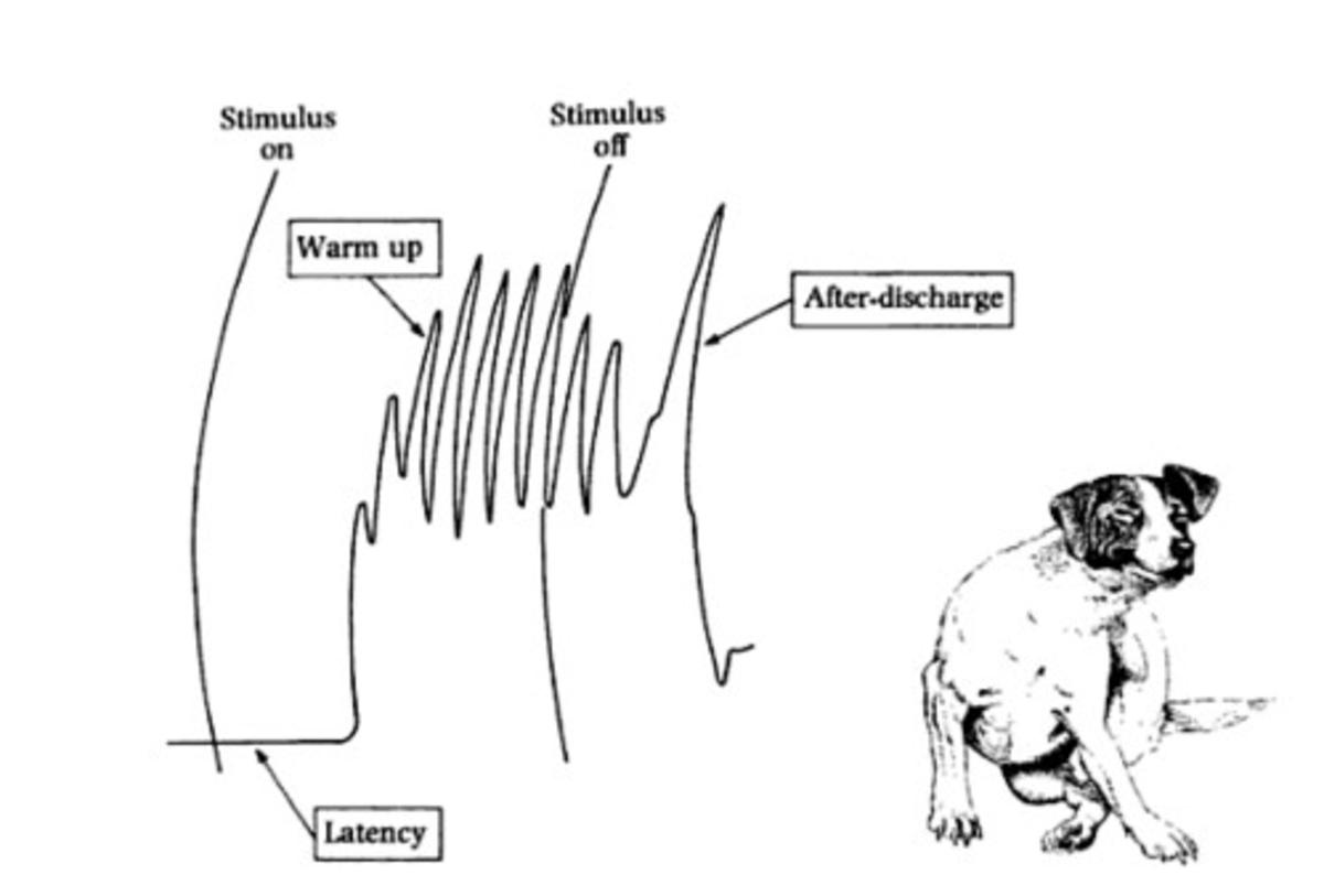 scratch reflex dog