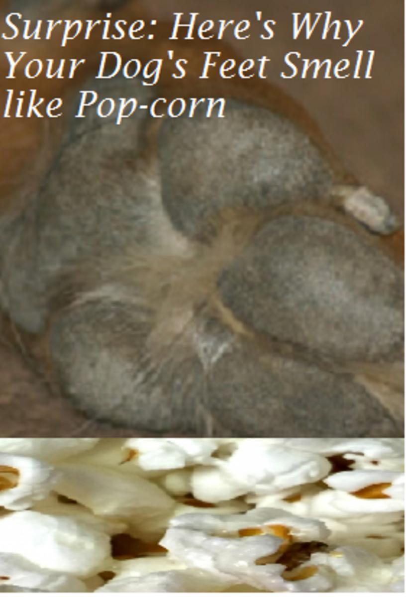 popcorn feet dog