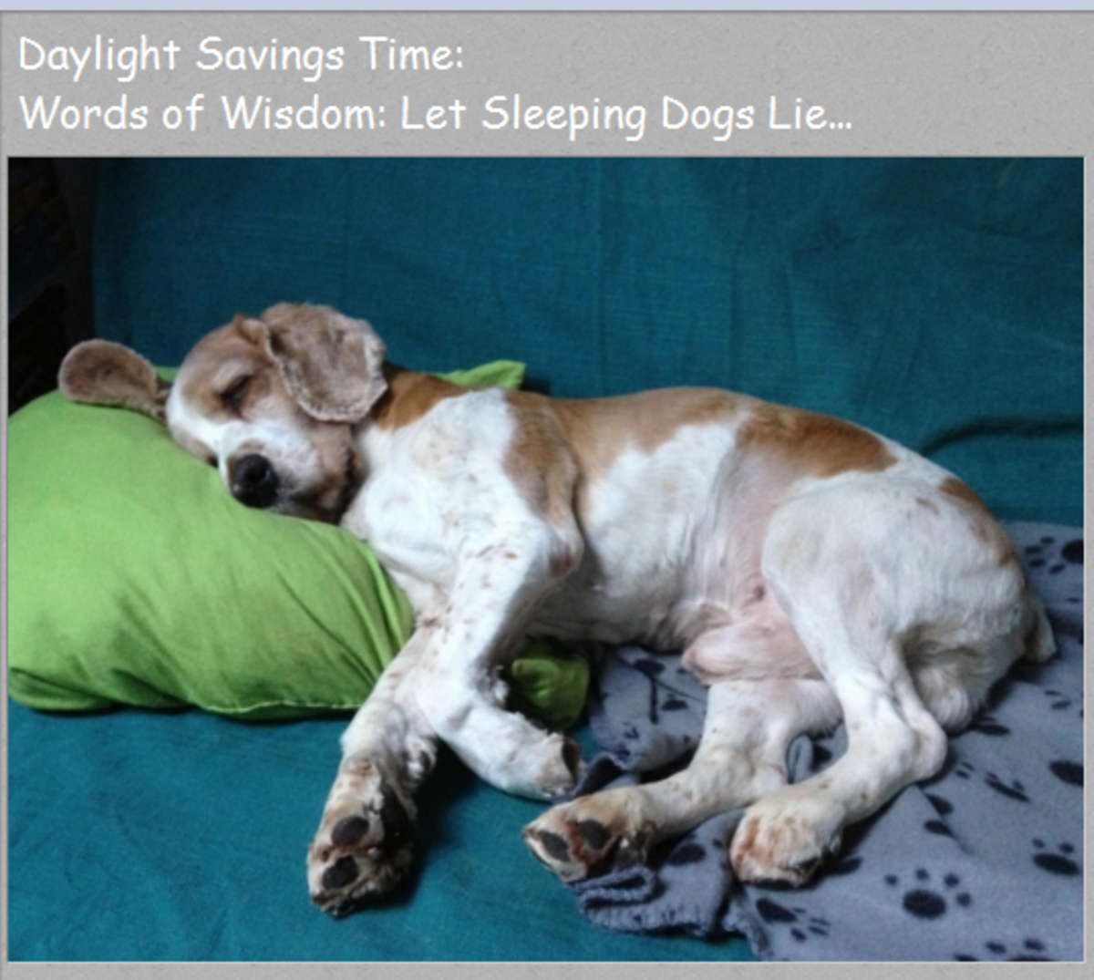 How To Train Your Dogs About Daylight Savings Time