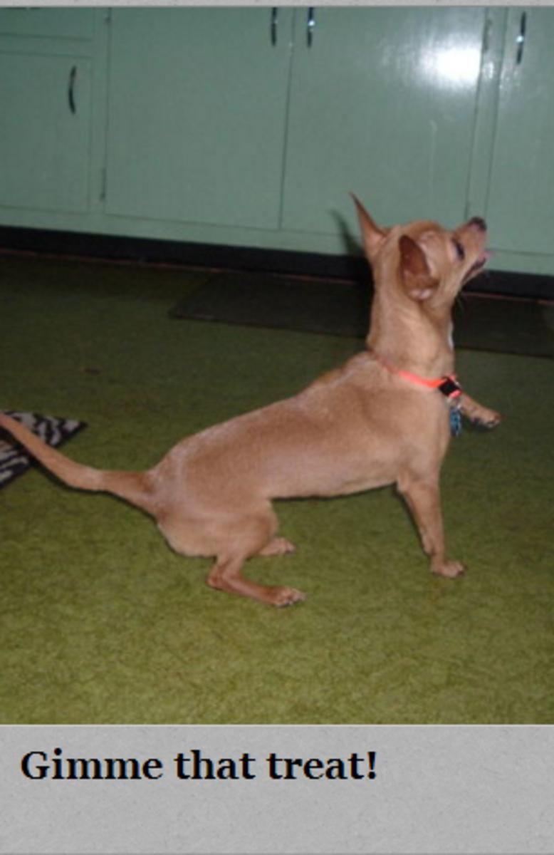 dog laser pointer
