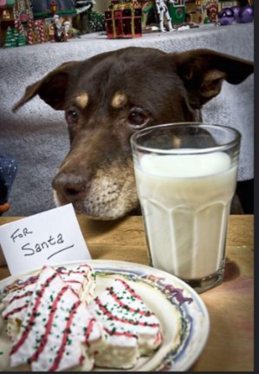 dog milk cookie