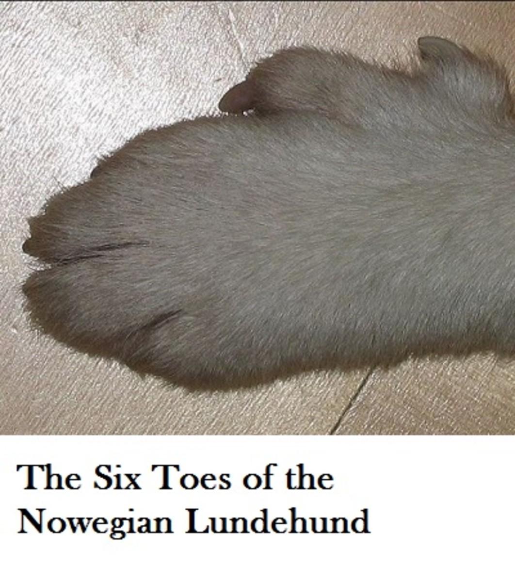 lundehunde