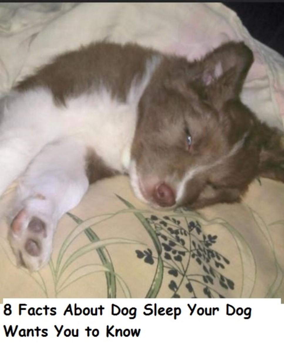 dog sleep 9
