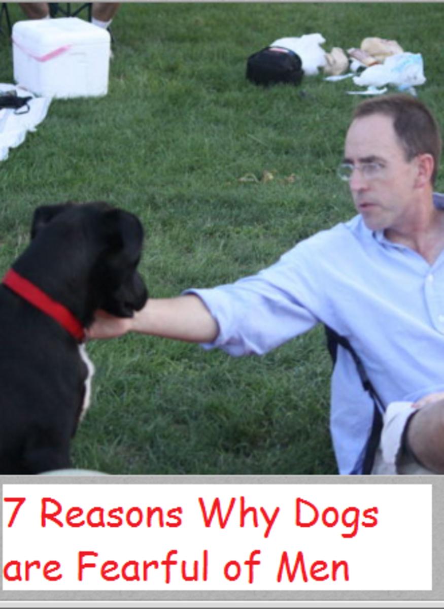 dogs afraid of men