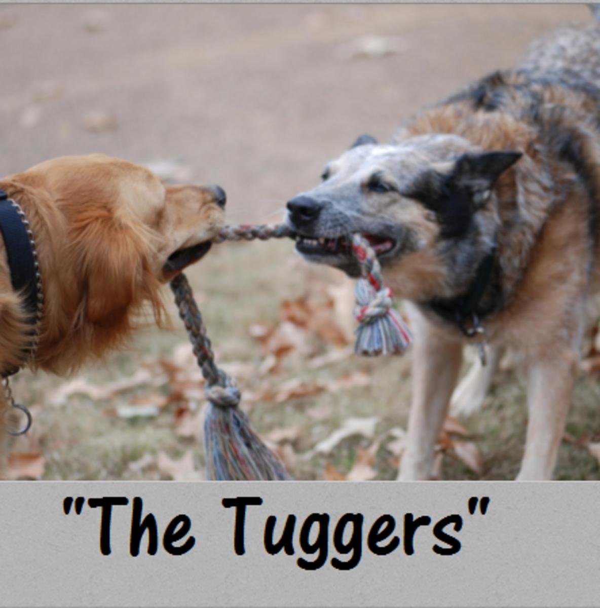 dog tug of war