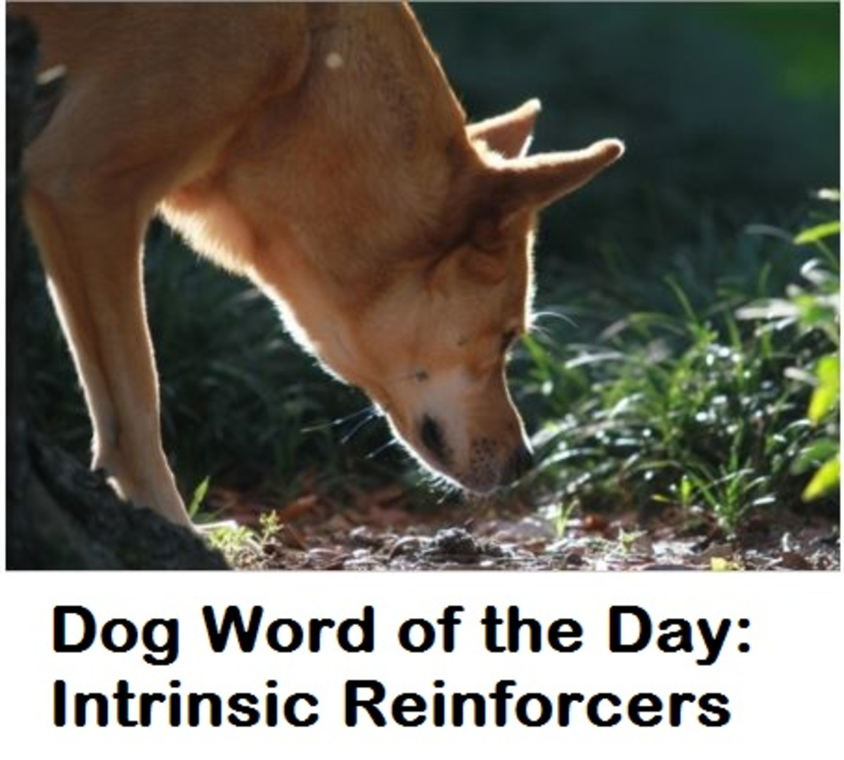 dog intrinsic behavior