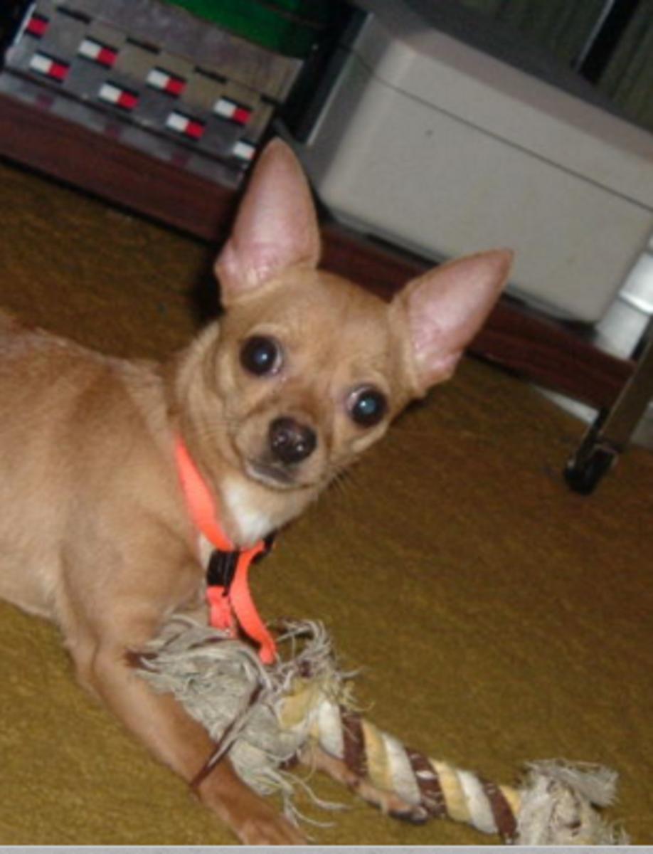 dog laser toy alternatives