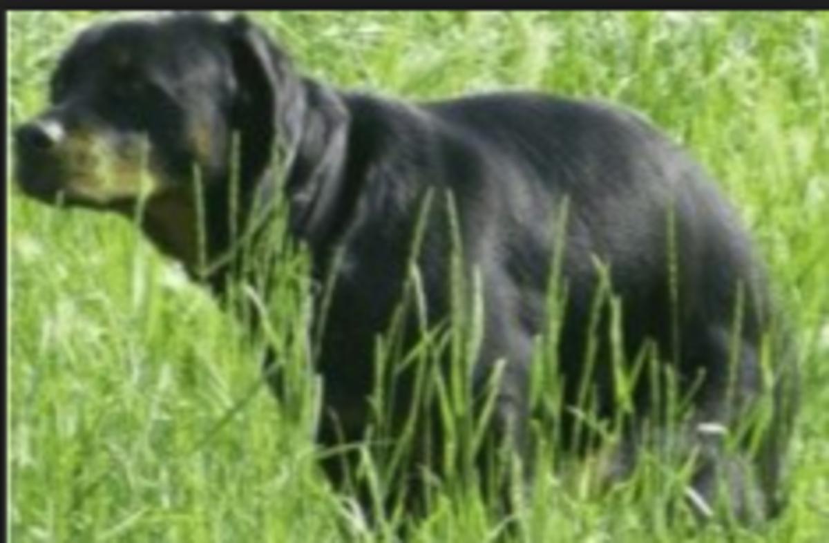 dog tail defecation nerve