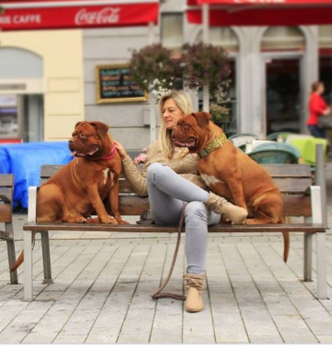 """Let your dogs view the city world pass by and """"take in"""" as much as possible."""