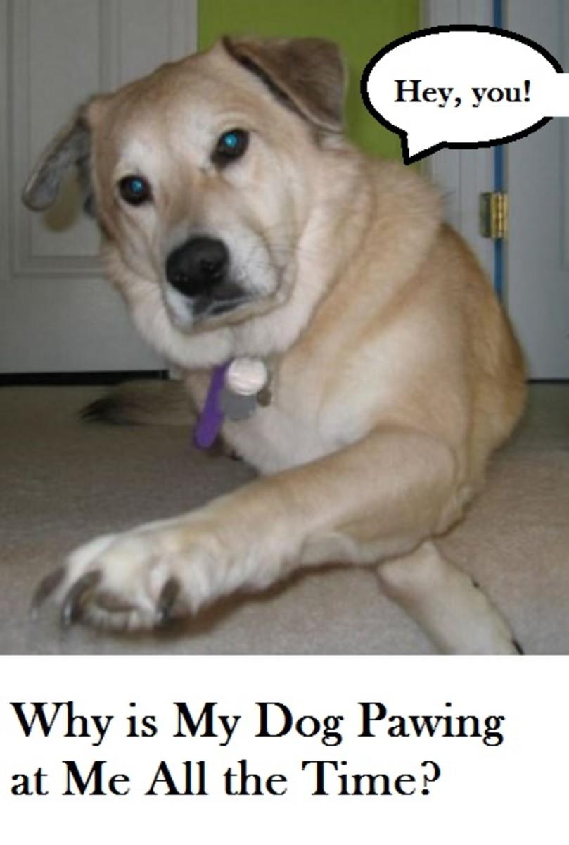 dog-pawing-reasons