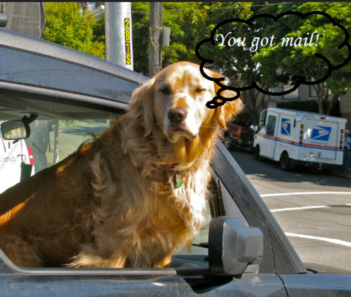 dog mailss