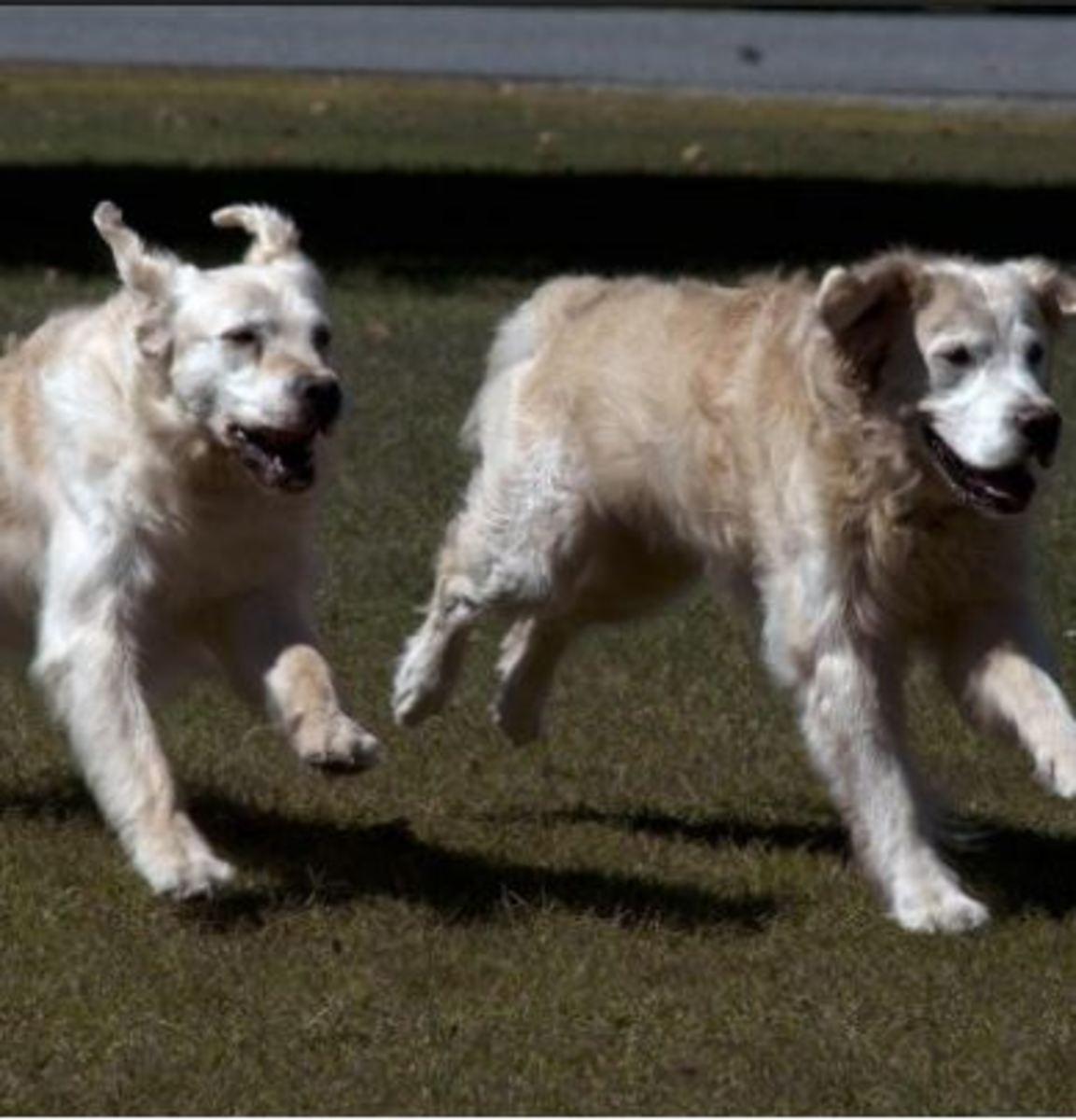 social-dogs-running