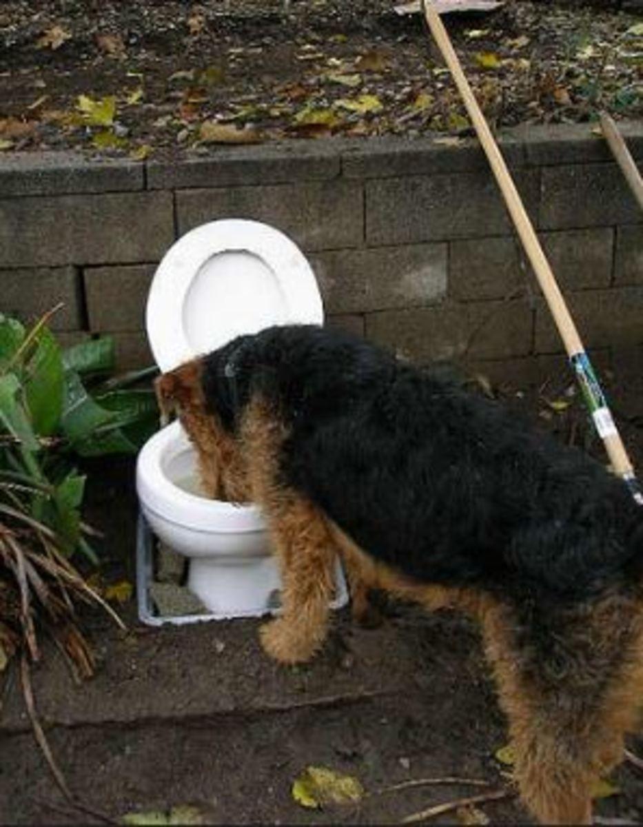 dog toilet bowl